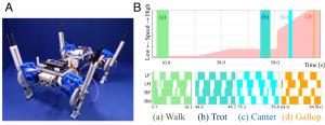 開発した四脚ロボット、B:再現された移動速度に応じた足並みの変化。上図:移動速度パラメータの変化。下図:色で示す期間は各脚が地面に接地している期間を示す。