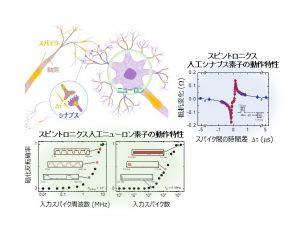 生体の神経回路網の模式図(左上)と、スピントロニクス素子で再現したニューロンの入力スパイク列に対する応答特性(下)と、シナプスの2つの入力スパイクの時間間隔に対する学習特性(右)の測定結果