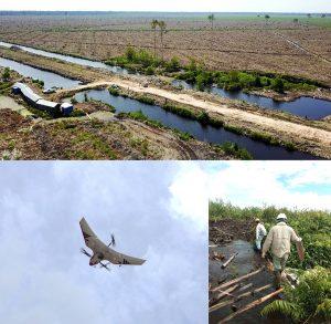 インドネシアの泥炭植林地