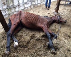 全身症状を示す感染馬
