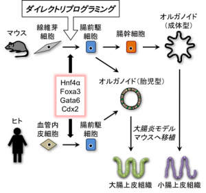 ダイレクトリプログラミング