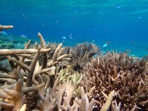 多様なサンゴ礁生物を対象とした、沖縄でしかできない研究を推進しています。