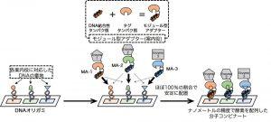 複数の酵素をDNAナノ構造体上の狙った場所に同時に並べることができるモジュール型アダプター