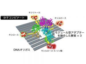 3種類の酵素を並べた「分子コンビナート」