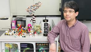 「白髭組」の提灯は、研究室の学生たちから50歳の誕生日祝いに贈られたもの。写真のレゴは、ほぼ50年来の趣味とのこと。レゴでつくった「DNAの二重らせん」も見える。