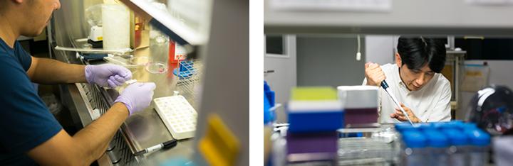 黙々と実験材料に向き合う研究スタッフ(左)。山崎教授みずから、実験機材を扱って見せてくれた(右)。