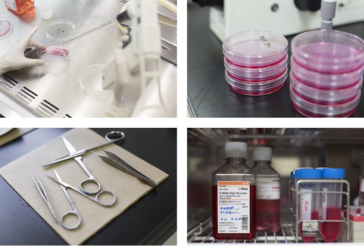 実験にはマウスを使う。実験室には解剖のための道具、細胞の培養を行うための道具がところ狭しと並んでいる。