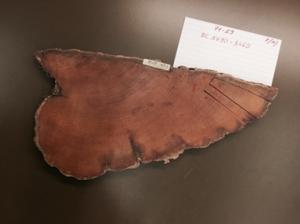 測定に使用した米国産木材サンプル(Bristlecone pine)