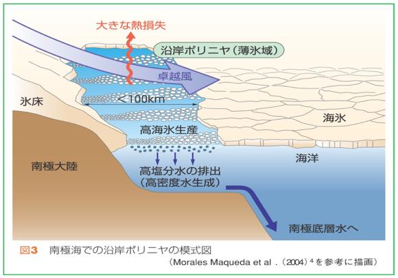 沿岸ポリニヤでできた海氷は風により沖へ流される。そのためにポリニヤでは常に海氷が生成され、これに伴い高塩分水も生成され続ける。この水が南極底層水の元となる。