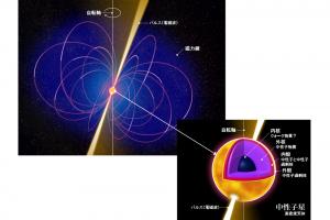 図5 中性子星。ほとんどが中性子でできた星であるが、内部の構造は上のようになっていると考えられている。中性子星は密度が原子核と同程度から数倍であり、中性子でできた巨大な原子核のようなものと捉えることができる。質量は太陽と同程度だが、半径は10kmほど。自転し、かつ強い磁場を持つため、左図のようなパルスを発生させる。このパルスによって地球から観測できる。(民井准教授提供)