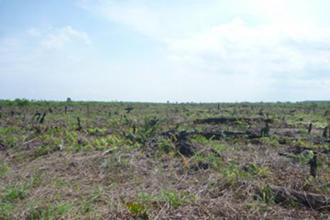 本来は豊かな泥炭湿地林が広がっていた地域が、開発により荒廃が進んでいる。(写真提供:甲山准教授)