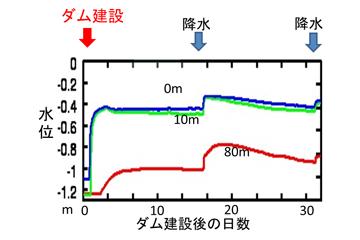 ダム建設により水位を約100cmかさ上げした結果,水路から80m地点においても70cmほど水位が上昇(地下65cmまで)。(画像提供:甲山准教授)