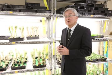 モデル植物としてよく使われるシロイヌナズナの苗の前で研究を説明する辻本教授。