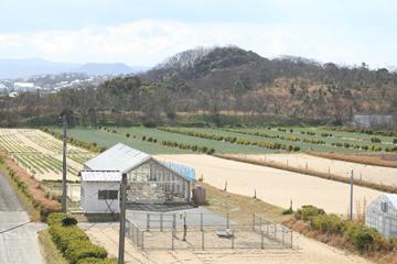 砂地でもともと何もとれなかったこの地から、現在ではスイカや長ネギ、ラッキョウなどの作物が。栄養価が高く、味も美味しいことから、砂地で取れた農産物は今や鳥取の重要な産物に成長している。砂地の農場を持つ大学は珍しいことから、日本の農業研究者から「この畑を使わせて欲しい」と問い合わせが来るという。