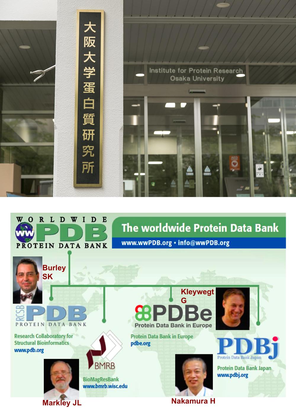 大阪大学の吹田キャンパス、「大阪大学蛋白質研究所」内にある「日本蛋白質構造データバンク(PDBj)」は、米国のRCSB-PDB、BMRB、EUのPDBeとともに世界の4拠点の一つとして、主にアジアの研究者から寄せられた膨大な量の蛋白質の3次元構造データの登録・編集・公開を行っている。中村教授はPDBjのトップとして、米国と欧州のPDBとテレビ電話で連絡をとりあいながら、協調して運営を行っている。