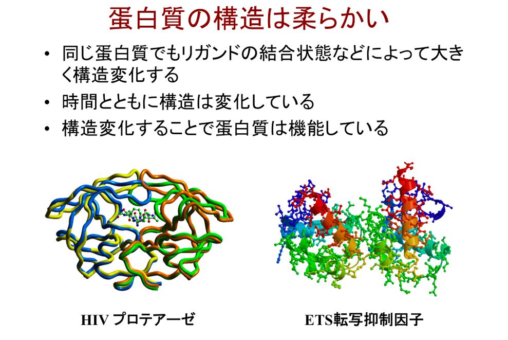 蛋白質は柔らかく、種類ごとにさまざま形を示すだけでなく、時間の経過によっても形が変化する。図の「HIVプロテアーゼ」「ETS転写抑制因子」はそれぞれヒト免疫不全症候群(AIDS)、癌に密接に関わり、構造の特定が新薬の開発へとつながっている。
