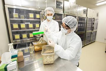 マウスを使った実験も、研究の重要なプロセスだ。