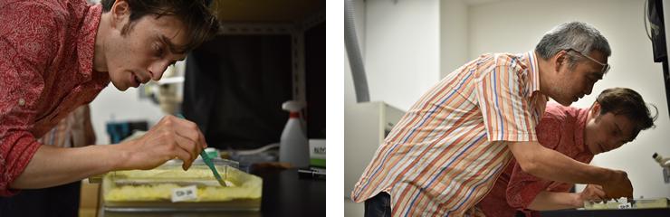 粘菌を研究するためオーストリアからやってきた大学院生Shenz Daniel氏。粘菌の神秘的な生態に魅せられたのだという。中垣教授も、粘菌の様子が気になって一緒にプレートの中を覗き込む。