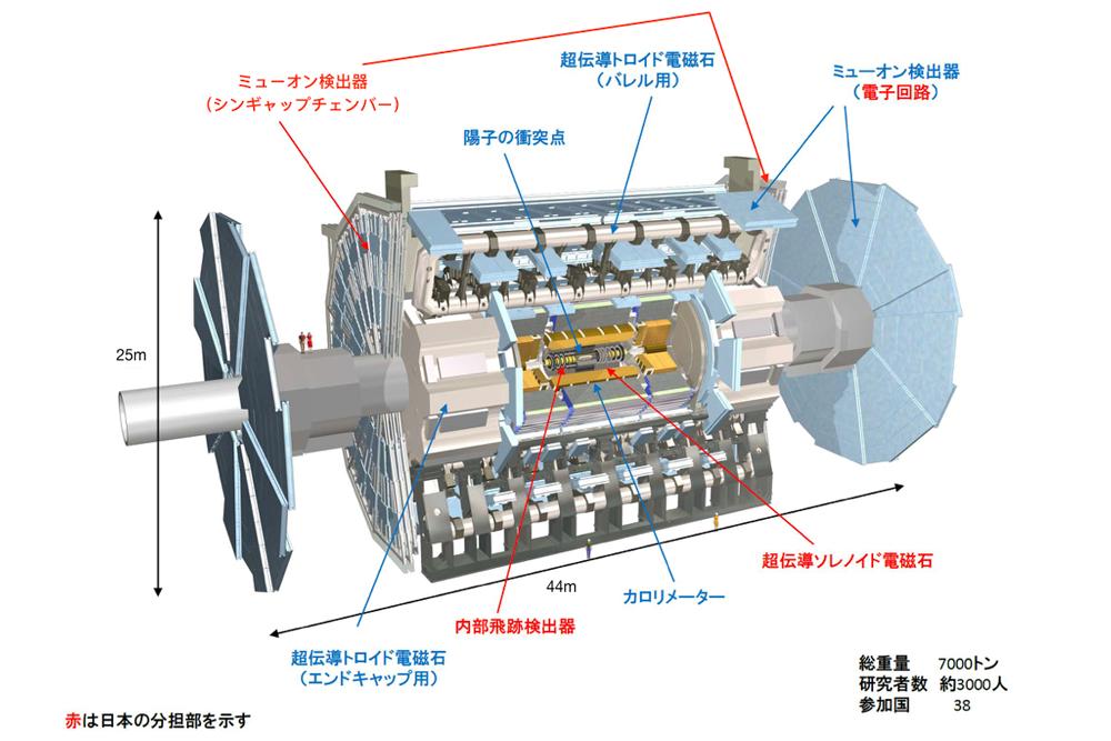 ATLAS検出器の概要図。両端の円盤部がミューオン検出器の主たる部分で、そのなかに3枚ずつ円盤状に組み上げられたシンギャップチェンバー(TGC)が据え付けられている。(図はATLAS Japan提供)