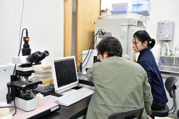 マコガレイの精子の動きを顕微鏡で観察する。電子顕微鏡やタンパク質の質量分析計など、センターにある解析装置は国内の臨海施設で随一の充実度を誇る。
