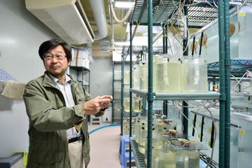 ライフサイエンスの研究に用いられるバイオリソース(生物遺伝資源)のうち、国が戦略的に整備することが重要なものについて、文部科学省主導でその収集・保存・提供にあたる「ナショナルバイオリソースプロジェクト」が展開されている。本センターは、脊椎動物の祖先としての特徴を持ち、研究資料として重要なホヤの育成・管理を、文部科学省より請け負っている。