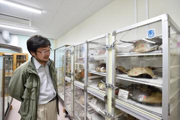 センター内の標本室に展示されているカブトガニ。本センターは、古くはカブトガニの系統学的研究、群体ボヤの自己非自己認識に関する研究、海産藻類に関する生理生態学的研究などの顕著な成果で知られる(その多くは標本室に展示されている)。