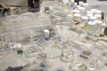 実験台の上にはこまごまとした材料や試料が無数にある。