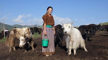 東北チベットのアムド地方で実施されたチベット牧畜語彙収集プロジェクトでは、フィールドワークによりさまざまな知見が得られた。写真:別所裕介