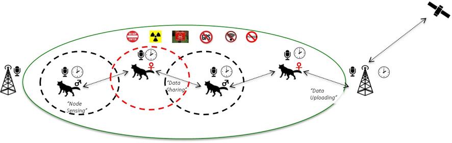 野生動物のなわばり特性を利用した通信ネットワーク構築イメージ。電力や通信インフラが脆弱な地域でも、動物たちの行動特性を踏まえてセンサを装着させれば、データを効率よく取得することができる。(画像提供:小林博樹准教授)