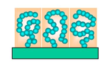"""底部の材料表面にポリマーブラシが""""生えて""""いる様子。この図は、濃厚ポリマーブラシよりも密度が低い「準希薄ポリマーブラシ」を表している。個々の高分子の形は""""ランラムコイル(糸まり状)""""から若干ひずんでいる。密度は~0.01鎖/nm<sup>2</sup> ほど。"""