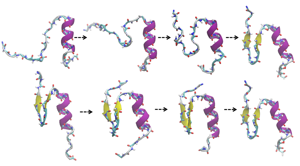 タンパク質の構造遷移。紐状から徐々に折りたたまれ、天然構造を形成してゆく。