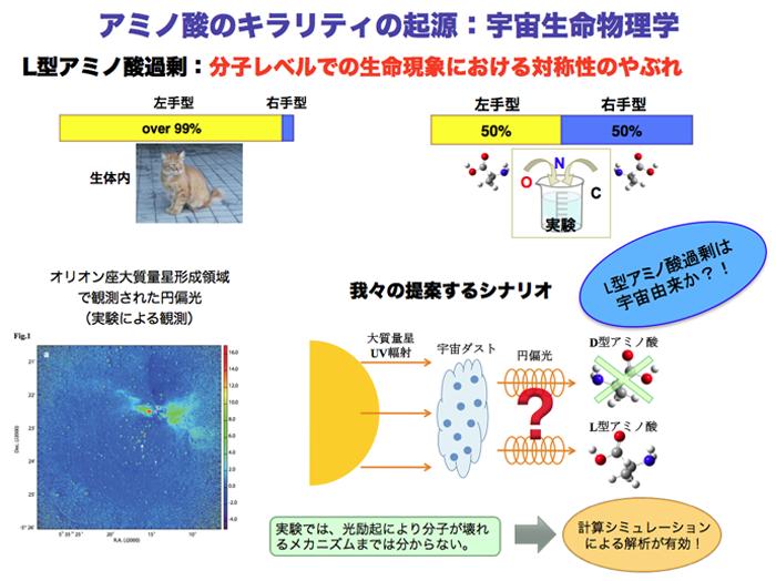 地球上の生命はL体(図・左上の「左手型」)のアミノ酸のみで構成されている。しかし化学的にアミノ酸を合成すればL体、D体(図・右上の「右手型」)は同量生み出されるはずである。その原因を、円偏光に求めるのが重田教授らのシナリオだ(図右下)。