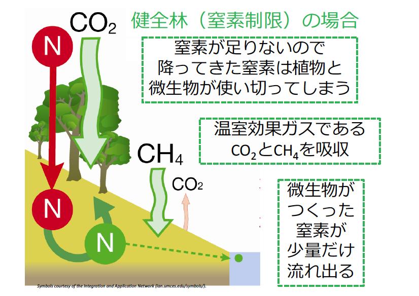 窒素循環が健全な森林からは、本来ごく少量の窒素しか森林外に流出しない。