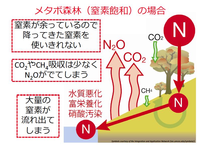メタボ化した森林からは、大量の窒素が流出し、下流域の環境に様々な悪影響を与える。