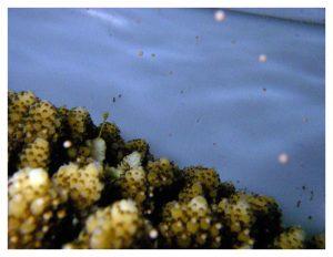 サンゴ礁生物など、沖縄のフィールドでしか研究できない対象を中心に研究を進めています。