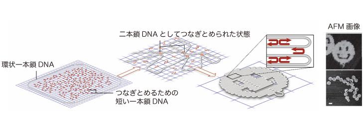 DNA折り紙でスマイルマークをつくる方法。右は実際に原子間力顕微鏡で見たナノサイズのスマイルマーク。