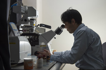 顕微鏡を覗く立花教授。ノックアウトマウスを1つ1つ解析していくのは時間と根気が必要だ。
