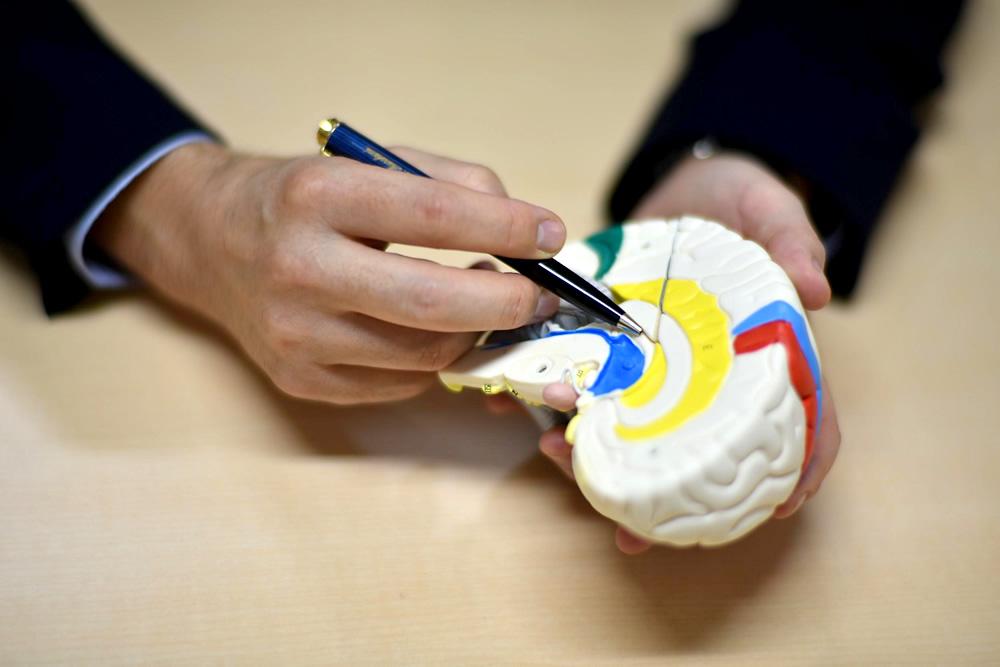 自己反応性免疫細胞があると、ストレスによって第三脳室と海馬、視床に囲まれた特定の2ヶ所の血管に微小炎症が生じ、それまで活性化していなかった神経回路が活性化される。