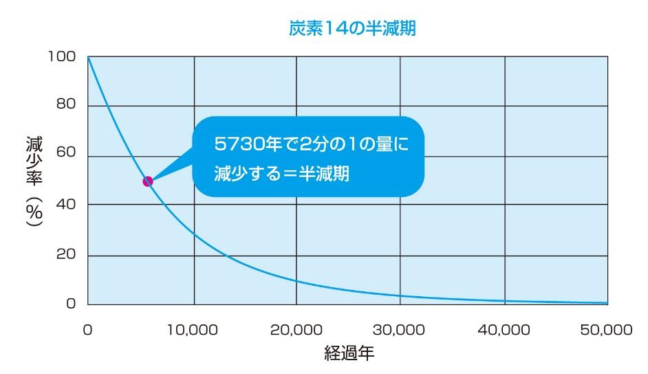 図3:生物の遺骸や化石などに含まれる炭素14の量は、時間とともに減少していく。