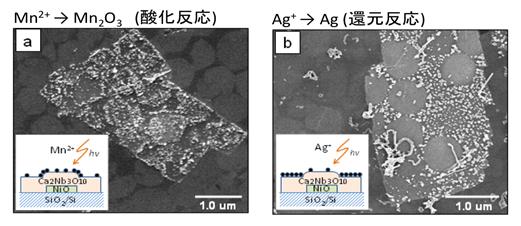 pn接合ナノシートによる光触媒反応の酸化還元反応の顕微鏡写真。理論の予想どおり、接合部にホールが、未接合部に電子が集まり、効果的に酸化還元反応が起きていることを世界で初めて実証した。