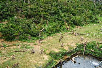 霊長類研究所RRS(第2キャンパス)は、日本医療研究開発機構のナショナルバイオリソースプロジェクト「ニホンザル」の拠点である。ここでは野生に近い条件でニホンザルの群れを飼育し、全国の研究機関に研究用ニホンザルを提供している。